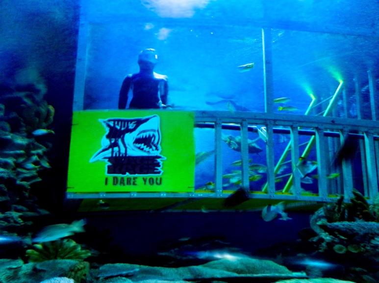 Shark tank, Aquaria Kuala Lumpur